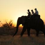 WH_ELEPHANTS05_0