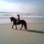 featherfoot-beach-horse