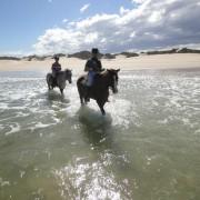papiesfontein-beach-horse