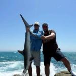 rock shark2