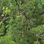 Canopy-Tours-Storms-river-smaller