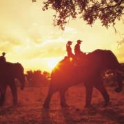 elephant-back-and-horse-lrg