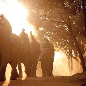 Meet Elephant at Sunrise